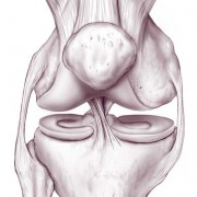 Bad knees diabetes outsides blog take a look at the structure of your knee joint as opposed to the structure of your shoulder side view of the shoulder blade ccuart Gallery